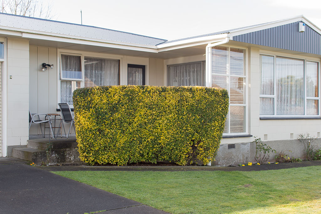 Thumbnail Image of Bush out front of 3 Mooray Avenue