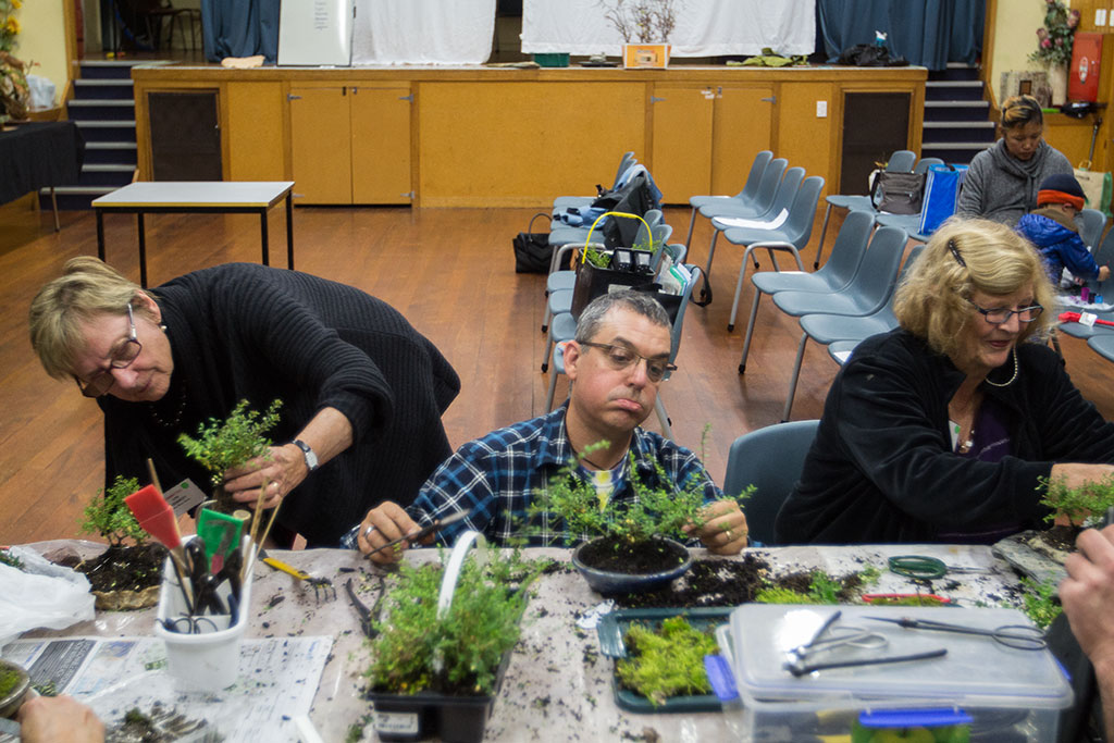 Thumbnail Image of Group planting at Avon Bonsai Society