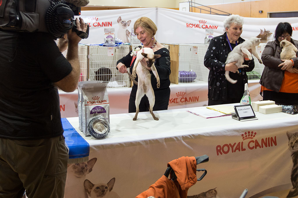 Thumbnail Image of Pamela Barrett, National Cat Show judge, with winner of the short haired cat division