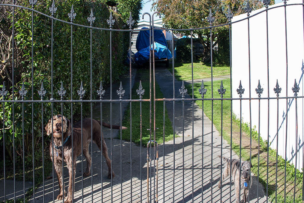 Thumbnail Image of Two dogs, Mooray Avenue, Bishopdale