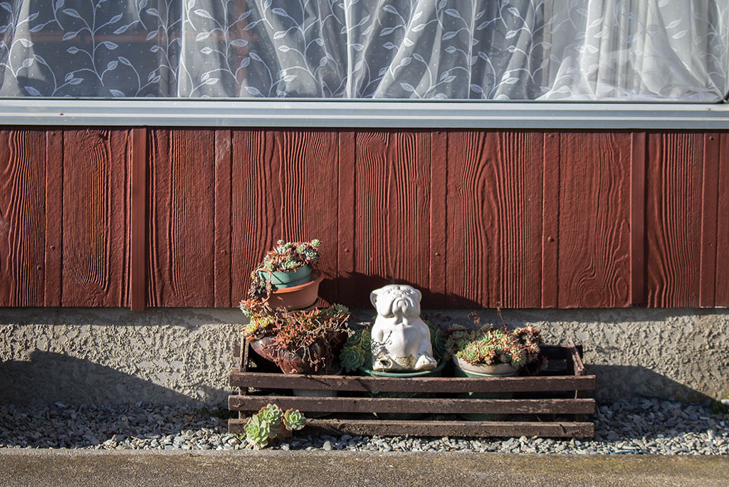 Thumbnail Image of Ceramic bulldog sits on display outside 104 Breens Road